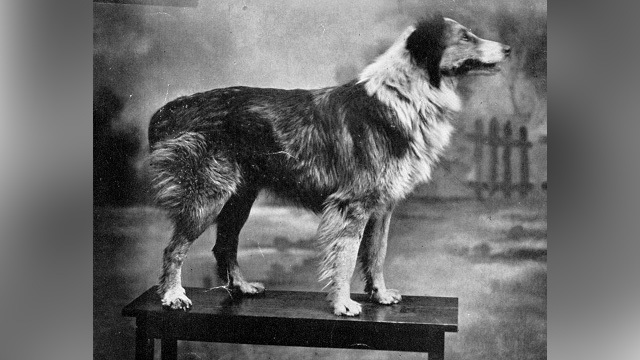 The incredible journey of Silverton's 'Wonder Dog'