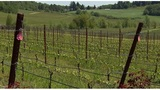 6 things to know about Oregon wine
